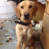 De bonnes nouvelles de Lucky, le chien affamé par sa famille