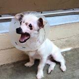 Ce chien n'avait aucun espoir de trouver une famille, son histoire est bouleversante