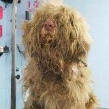 Elle ouvre son salon de toilettage en pleine nuit pour sauver la vie d'un chien