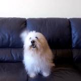 Lucky, le meilleur chien acteur du Festival de Cannes 2015