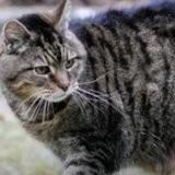 Ces 5 chats sont les plus vieux du monde !
