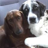 Cette chienne refuse d'être adoptée sans son meilleur ami !