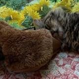 Cette chatte remercie son nouvel humain de l'avoir adoptée avec une livraison très spéciale !