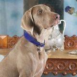 Luxury Hound : des accessoires pour chiens luxueux et équitables