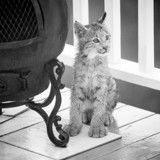 Il croit entendre des chats, ouvre sa porte et découvre quelque chose d'absolument incroyable