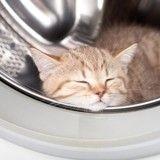 Un chaton reste coincé dans une machine à laver en marche… et survit