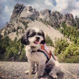 Elle sauve une chienne abandonnée et l'emmène faire le tour des Etats-Unis (Photos)