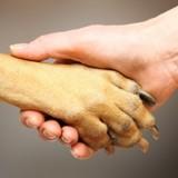 Une école pour les chiens d'assistance pour diabétiques ouvre dans la Drôme