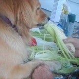 Ce chien est prêt à tout pour aider son maître à préparer son repas