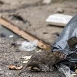 Maison de l'horreur dans le Doubs : 40 chats malades découverts, mais ce n'était que le début du cauchemar…