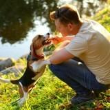 5 petites attentions qui feront plaisir à votre chien