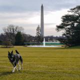 Champ, Major, Bo, Sunny... : quel est le quotidien d'un chien à la Maison Blanche ?