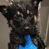 Après avoir adopté un chien dans un refuge en 2018, le président des USA Joe Biden mobilise 200 000 $ de donations