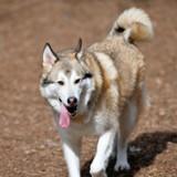 Leur chien fugue, 6 mois après ils reçoivent un appel hallucinant