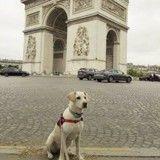 Avoir un chien en ville : 7 galères que vous ne soupçonniez pas
