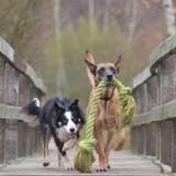 Mesurer le QI de votre chien ? C'est désormais possible !