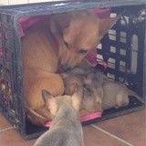 Une chienne retrouve le courage de vaincre la maladie après avoir rejoint ses chiots