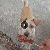 Il donne à manger à une chienne errante mais ne s'attendait pas à ça…!