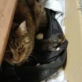 Une chatte errante ramène une petite surprise à la femme qui lui donne à manger