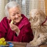 10 races de chiens adaptées aux personnes âgées