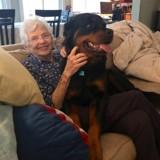 Cette grand-mère qui n'aime que les petits chiens fond totalement pour un énorme Rottweiler