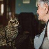 5 remèdes de grand-mère pour vous débarrasser efficacement des odeurs d'urine de chat