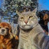 Le meilleur selfie de 2017 ? C'est celui de Manny le chat et son gang !