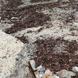 Il se dépêche de rentrer avant la marée haute et aperçoit sur la plage une forme qui lui donne des sueurs froides