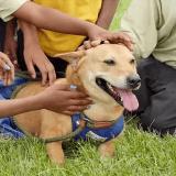 Battu par les humains, cet incroyable chien devient un exemple pour les enfants