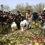La Chine célèbre le premier mariage collectif pour chiens !