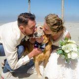 Son chien allait mourir, elle décide d'en faire son témoin de mariage
