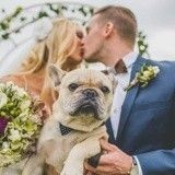 Ces 20 chiens assistent au mariage de leurs maîtres et le rendent encore plus magique !