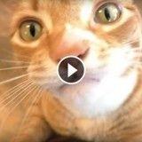 La crème chantilly rend fou Marmalade, le célèbre chat youtubeur ! (Vidéo du jour)