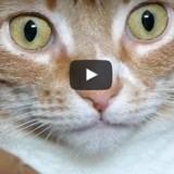 Ce chat est surpris pour une raison bien étonnante… découvrez-la ! (Vidéo du jour)