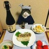 Ce chat se déguise chaque jour pour manger avec sa maîtresse et régaler la Toile