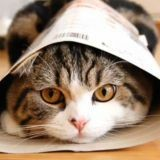 Maru le chat et la boite piège (Vidéo du jour)