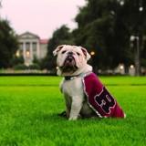 Une école organise une cérémonie pour dire adieu à leur chien préféré