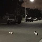 Abandonné dans la rue, ce lapin refuse de quitter son compagnon mort