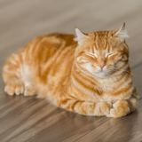 Grâce à cette litière connectée, la santé de votre chat est surveillée en permanence !