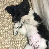 Après la mort de son chat, Nina Dobrev se console en adoptant un adorable chiot