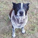 Un vieux chien sourd et presque aveugle a protégé une fillette de 3 ans perdue en pleine montagne
