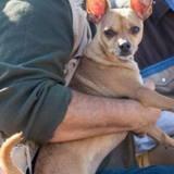 Il perd son chien pendant 4 jours après un accident de voiture : leurs retrouvailles font chaud au coeur (vidéo)