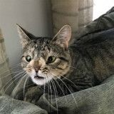 Cette chatte différente était promise à l'euthanasie à cause d'un chromosome en plus (Photos)