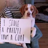 Les plus belles bêtises de Maymo le célèbre Beagle ! (Vidéo du jour)
