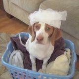 Le chien qui aimait vraiment beaucoup l'assouplissant ! (Vidéo du jour)