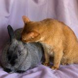 L'histoire d'amitié éternelle de Kara le chat et Melba le lapin