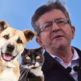 Dis-moi si tu as un chien ou un chat, je te dirai pour qui tu votes