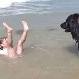 Une fillette se fait recouvrir par une vague, la réaction de son chien est incroyable (Vidéo)