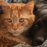 Pourquoi nettoyer les yeux de son chat ou de son chien ?