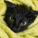 Comment s'y prendre pour laver son chat ?